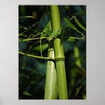 Impresión Bambus de la lona de Leinwanddruck   Lei Impresiones