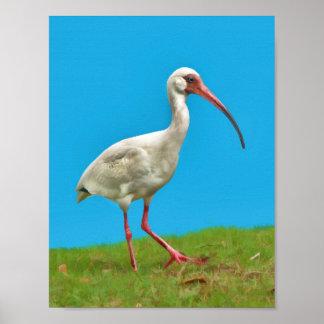 Impresión blanca de Ibis