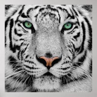 Impresión blanca de la cara del tigre poster