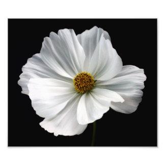 Impresión blanca de la foto del cosmos fotografía