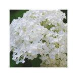 Impresión blanca de la lona del Hydrangea Impresion En Lona