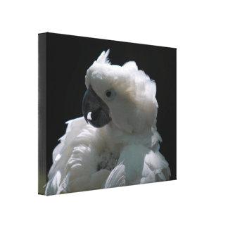 Impresión blanca de la lona del pájaro del Cockato Impresiones De Lienzo