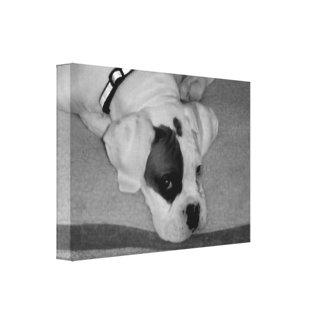 Impresión blanca de la lona del perro del boxeador impresion de lienzo
