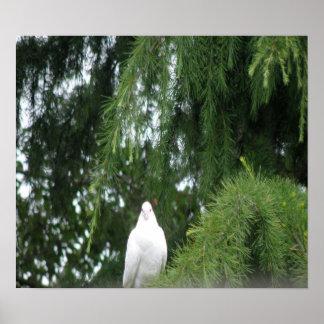 Impresión blanca de la paloma póster
