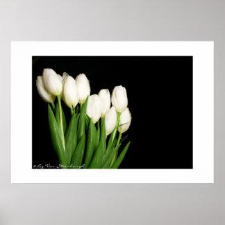 Impresión blanca de los tulipanes impresiones
