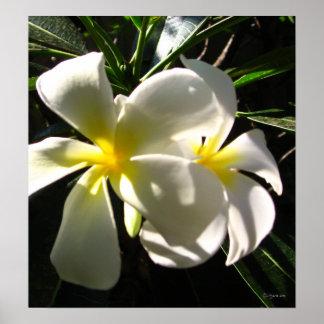 Impresión blanca del poster de las flores del Fran