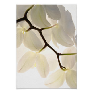 Impresión blanca del poster de las orquídeas