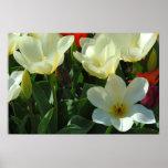 Impresión blanca del poster de los tulipanes