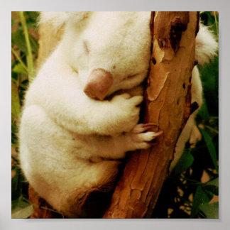 Impresión blanca del poster del oso de koala