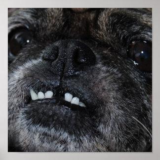 Impresión blanca nacarada de los dientes de los ba