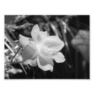 Impresión blanco y negro de la foto