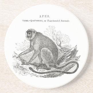 Impresión blanco y negro del mono de los 1800s del posavaso para bebida