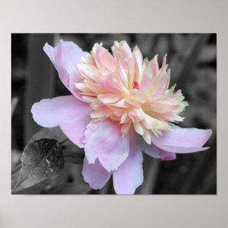 Impresión blanco y negro del poster de la flor del