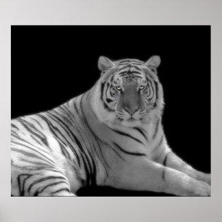 Impresión blanco y negro del tigre póster