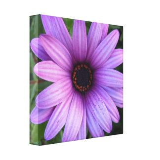 Impresión bonita de la lona de la flor del aster impresiones en lona