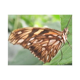 Impresión bonita de la lona de la mariposa de Brow Impresiones En Lona Estiradas