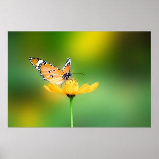 Impresión bonita del poster de la mariposa que se