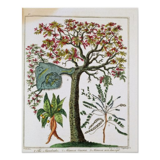 Impresión botánica a partir del siglo XVIII Posters