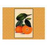 Impresión botánica anaranjada del vintage tarjeta postal