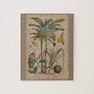 Impresión botánica antigua - fruta tropical rompecabezas con fotos