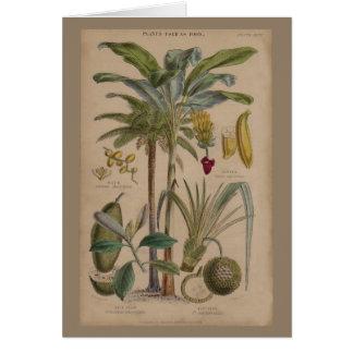 Impresión botánica antigua - fruta tropical tarjeta de felicitación
