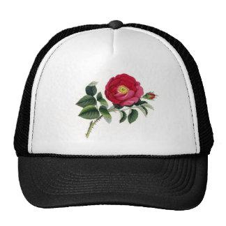 Impresión botánica - color de rosa francés (Rosa Gorro De Camionero