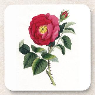 Impresión botánica - color de rosa francés (Rosa Posavasos De Bebida