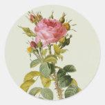 """Impresión botánica color de rosa - """"Rosa Bifera"""" Pegatina Redonda"""
