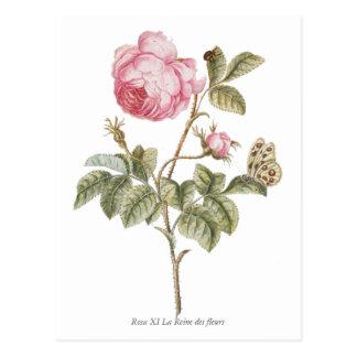 Impresión botánica color de rosa rosada del postal