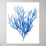 Impresión botánica costera de no. 10 azules de la  posters