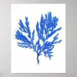 Impresión botánica costera de no. 4 azules de la i posters