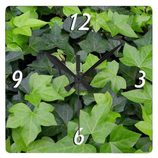 Impresión botánica de la hiedra verde reloj cuadrado