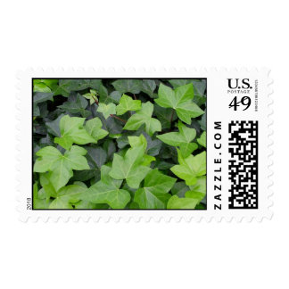 Impresión botánica de la hiedra verde timbre postal