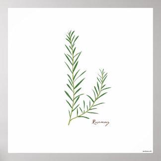Impresión botánica de la hierba del ejemplo el | poster