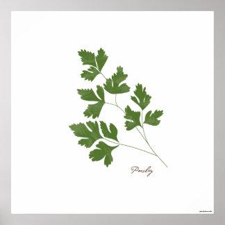 Impresión botánica de la hierba del ejemplo el | póster
