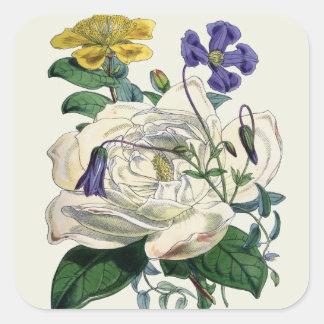 Impresión botánica de la magnolia del vintage - pegatina cuadrada