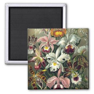 Impresión botánica de la orquídea imán cuadrado