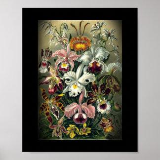 Impresión botánica de la orquídea póster