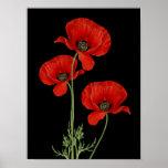 Impresión botánica de las amapolas rojas del póster