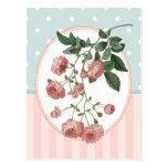 Impresión botánica de los rosas del rosa del colla tarjetas postales
