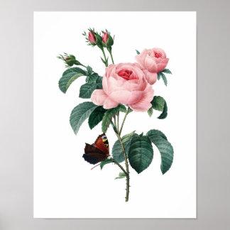 Impresión botánica de los ROSAS originales por Red Póster