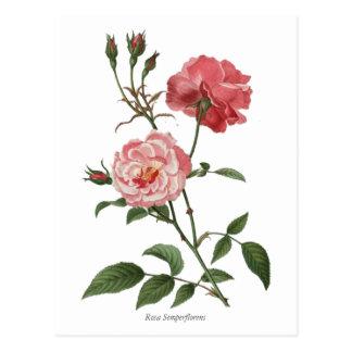 Impresión botánica de los rosas rosados del postal