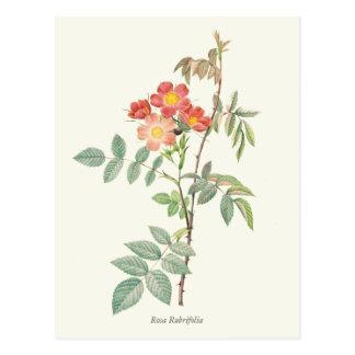 Impresión botánica de los rosas rosados y rojos postal