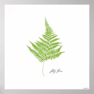 Impresión botánica del helecho del ejemplo el | de póster