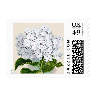 Impresión botánica del Hydrangea blanco - sello