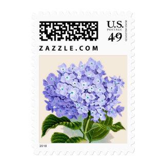 Impresión botánica del Hydrangea púrpura - sello