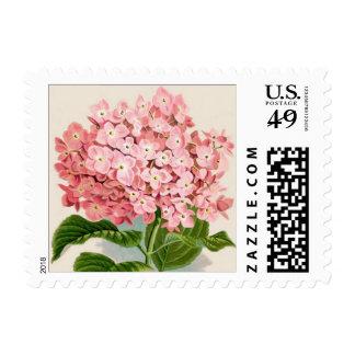 Impresión botánica del Hydrangea rosado - sello