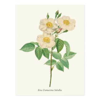 Impresión botánica del rosa blanco y amarillo del postal