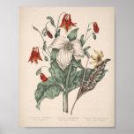 Impresión botánica del vintage poster
