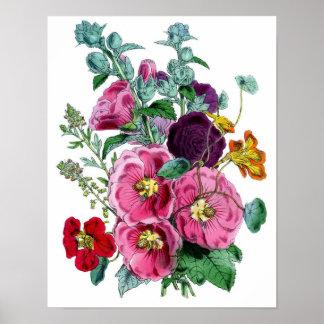 Impresión botánica - Hollyhocks y rosas Póster